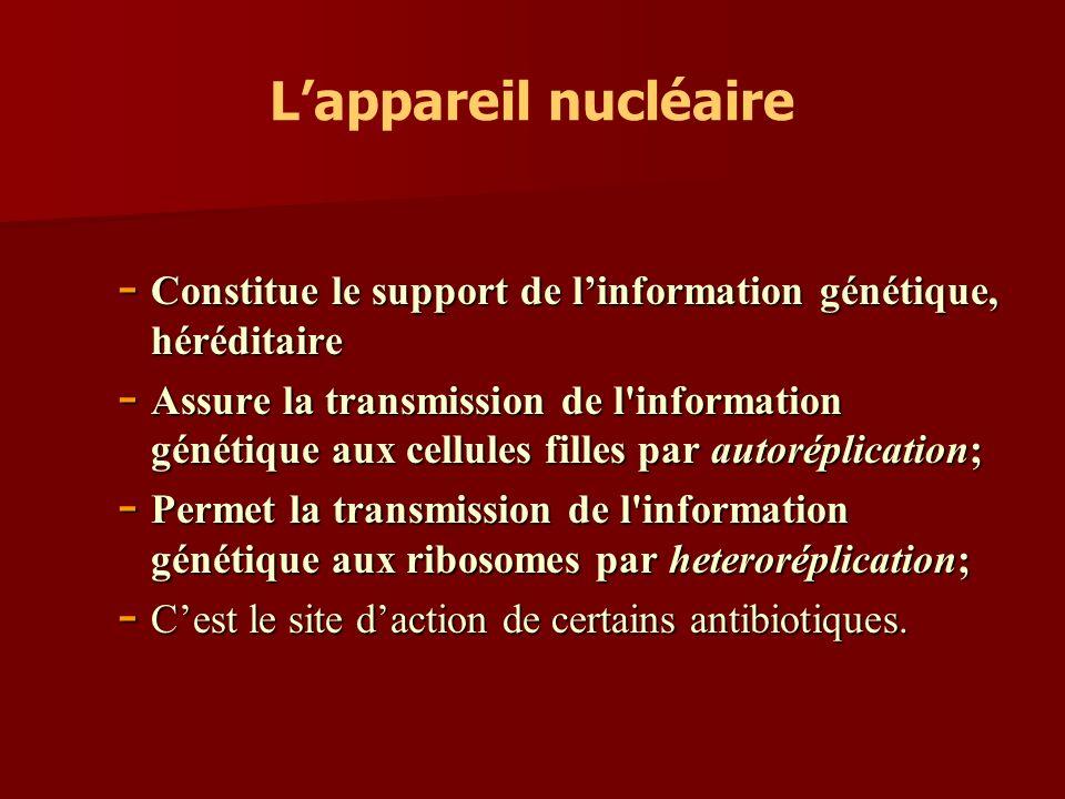 L'appareil nucléaire Constitue le support de l'information génétique, héréditaire.