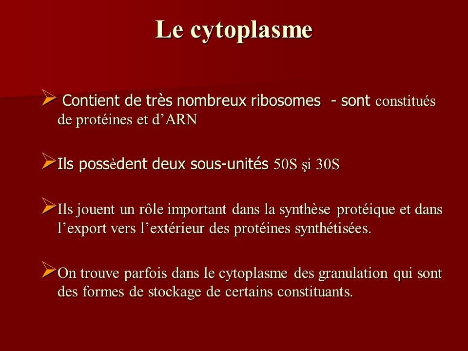 Le cytoplasme Contient de très nombreux ribosomes - sont constitués de protéines et d'ARN. Ils possèdent deux sous-unités 50S şi 30S.