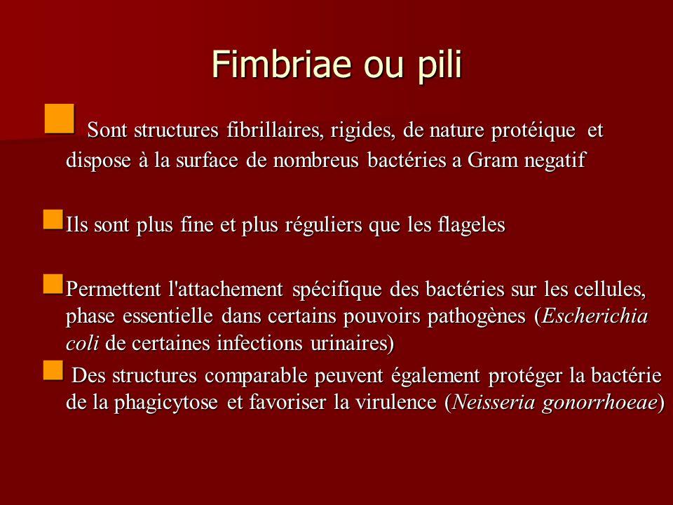 Fimbriae ou pili Sont structures fibrillaires, rigides, de nature protéique et dispose à la surface de nombreus bactéries a Gram negatif.