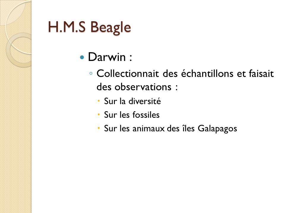 H.M.S Beagle Darwin : Collectionnait des échantillons et faisait des observations : Sur la diversité.