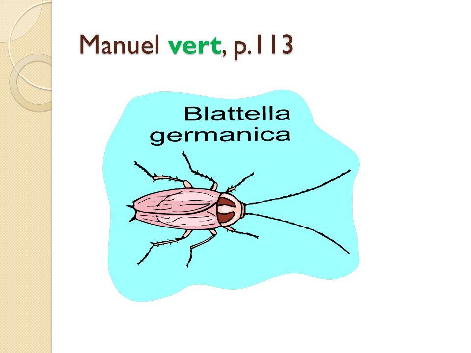 Manuel vert, p.113