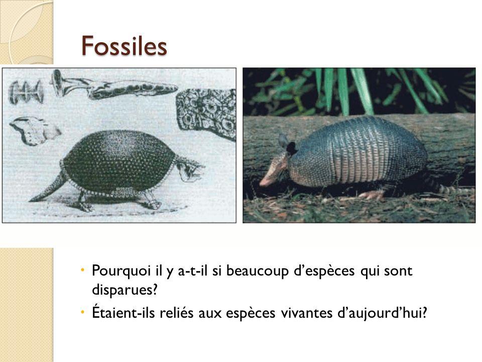 Fossiles Pourquoi il y a-t-il si beaucoup d'espèces qui sont disparues.