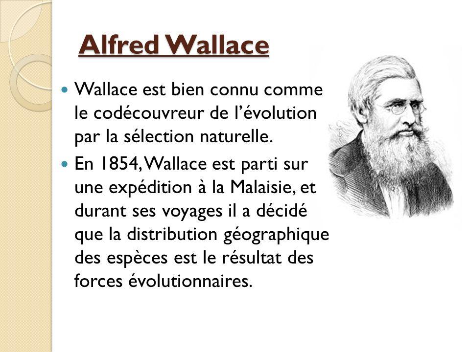 Alfred Wallace Wallace est bien connu comme le codécouvreur de l'évolution par la sélection naturelle.