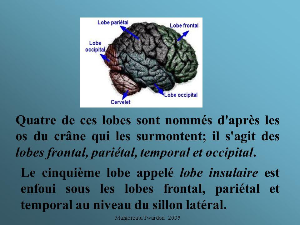 Quatre de ces lobes sont nommés d après les os du crâne qui les surmontent; il s agit des lobes frontal, pariétal, temporal et occipital.