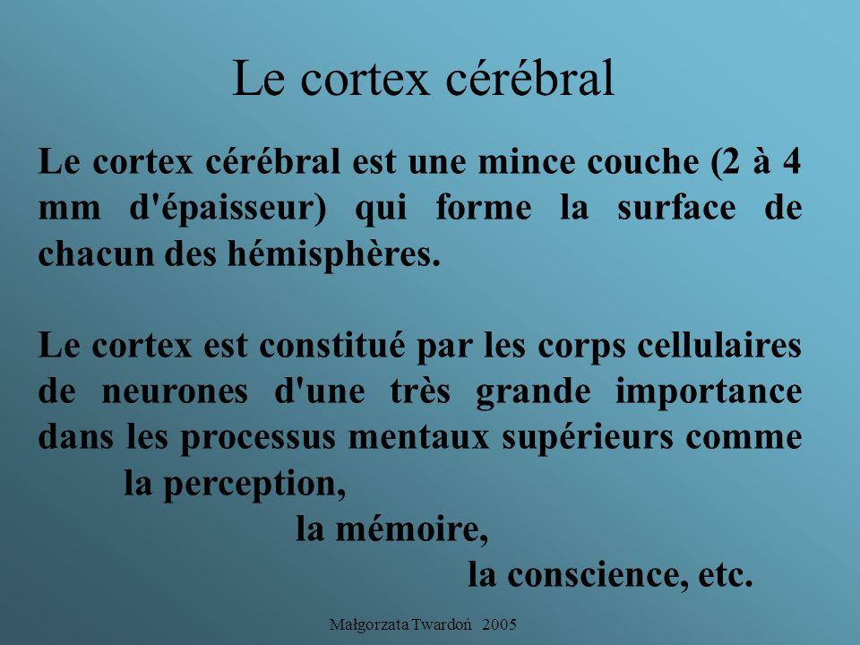 Le cortex cérébral Le cortex cérébral est une mince couche (2 à 4 mm d épaisseur) qui forme la surface de chacun des hémisphères.