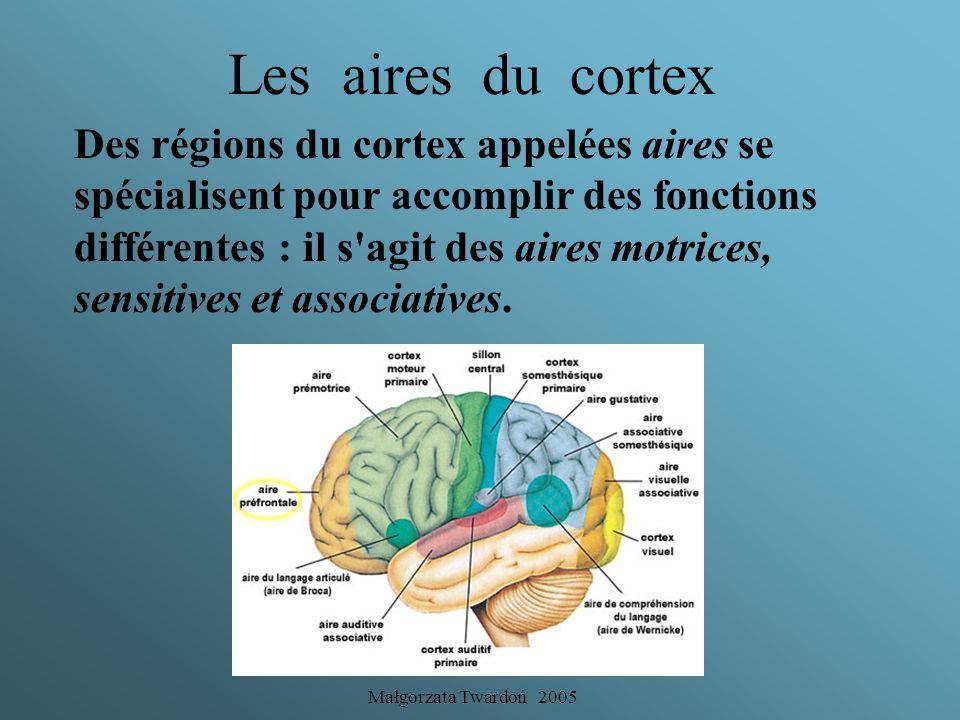 Les aires du cortex