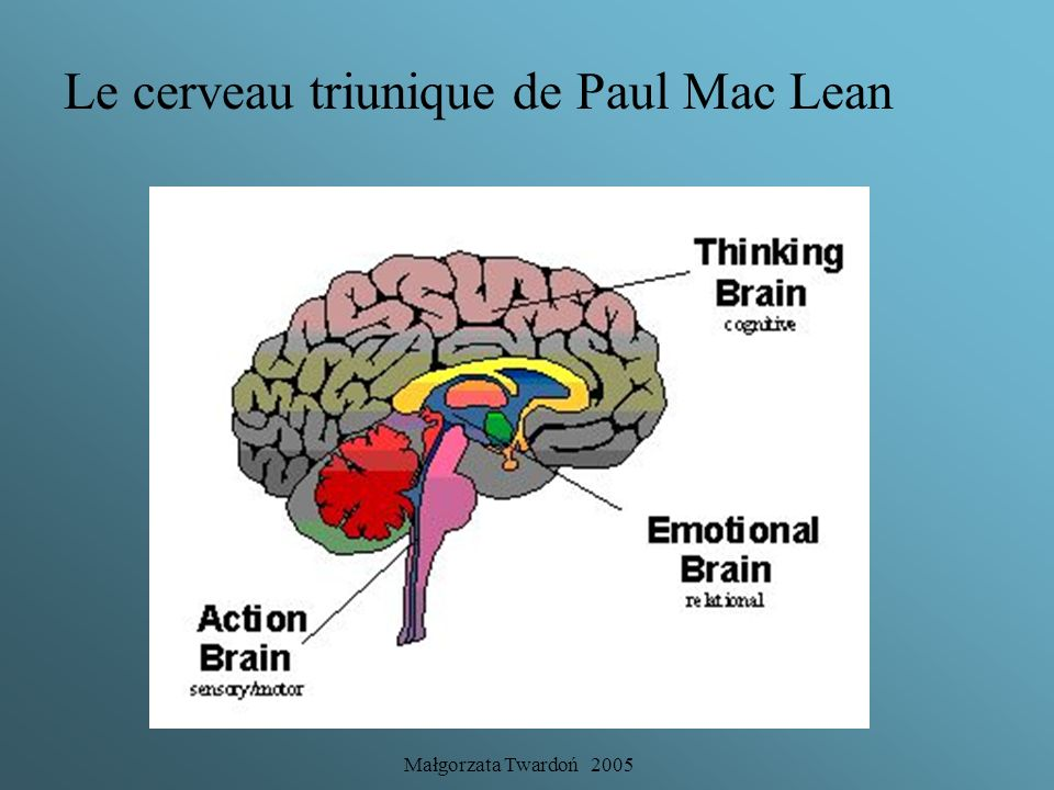 Le cerveau triunique de Paul Mac Lean