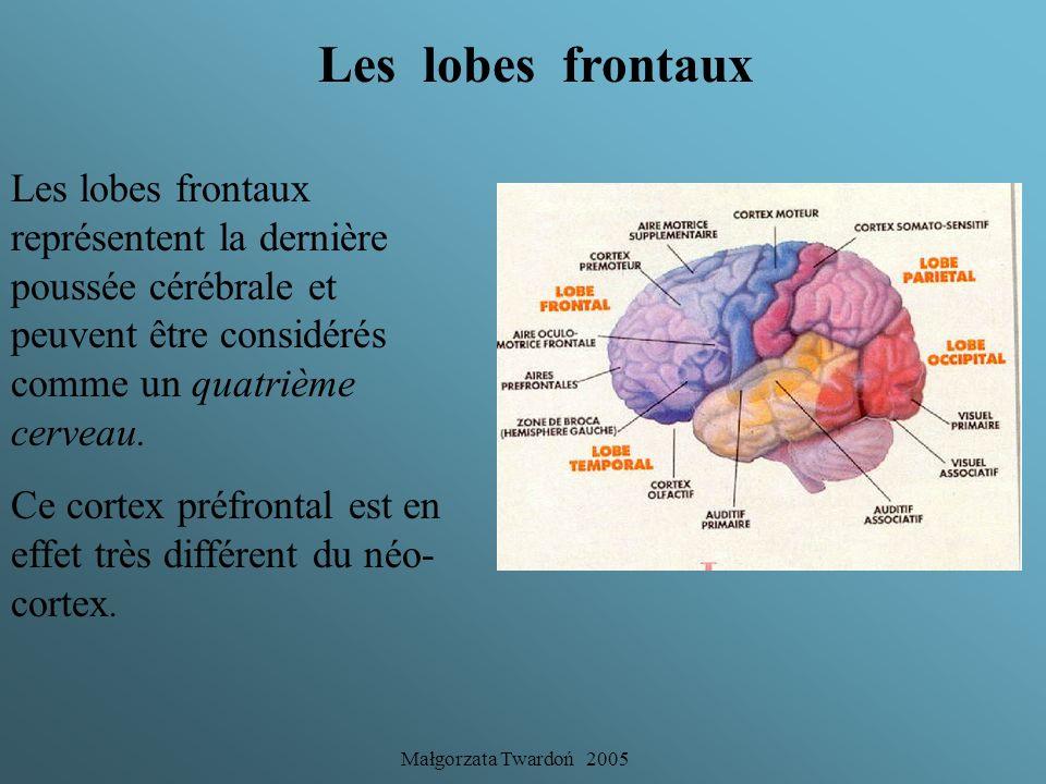 Les lobes frontaux Les lobes frontaux représentent la dernière poussée cérébrale et peuvent être considérés comme un quatrième cerveau.