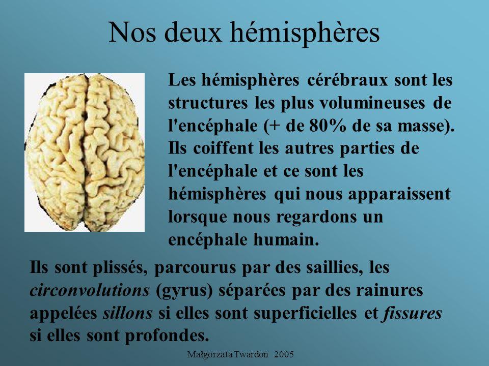 Nos deux hémisphères Les hémisphères cérébraux sont les structures les plus volumineuses de l encéphale (+ de 80% de sa masse).