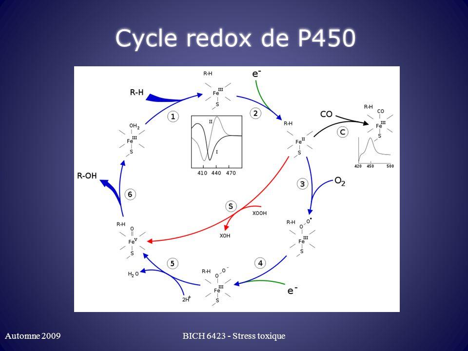 Cycle redox de P450 Automne 2009 BICH 6423 - Stress toxique