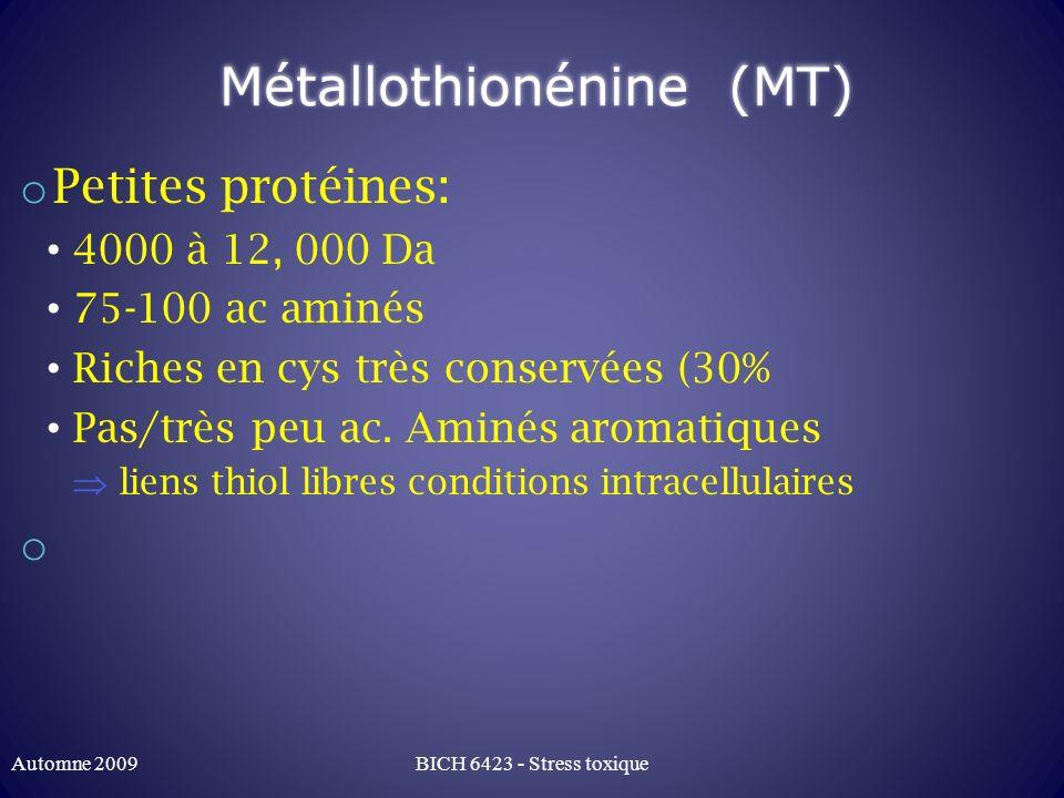 Métallothionénine (MT)