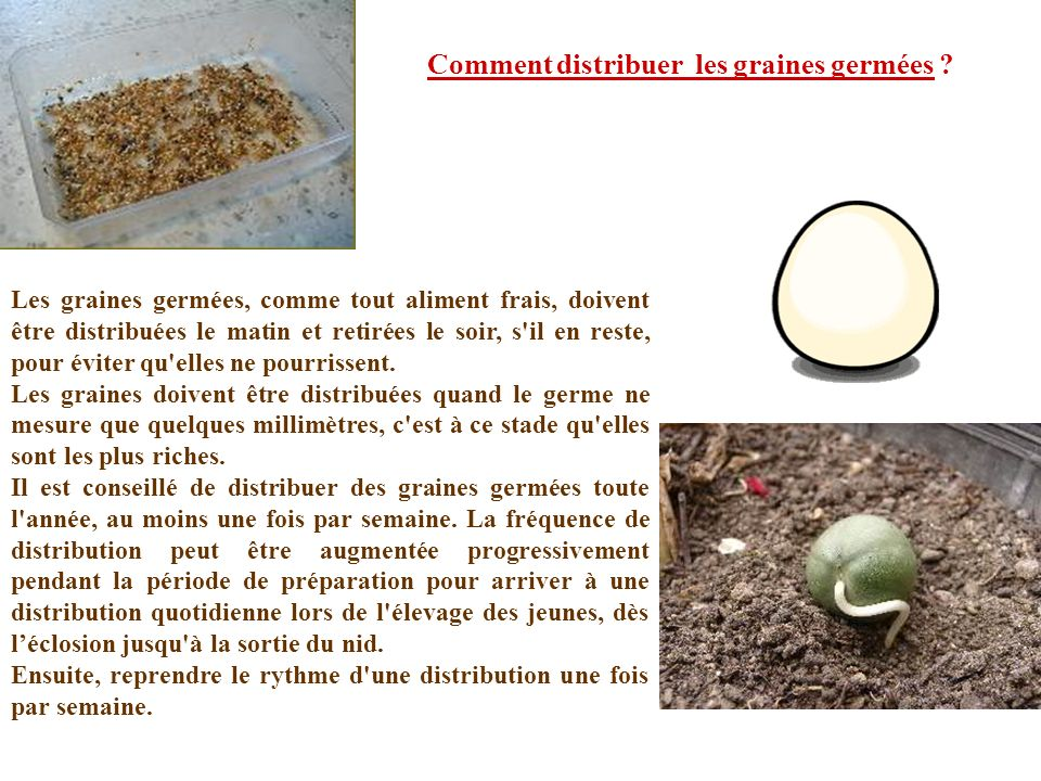 Comment distribuer les graines germées