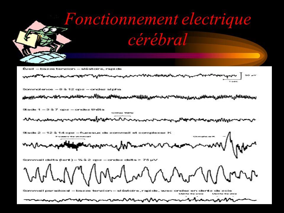 Fonctionnement electrique cérébral