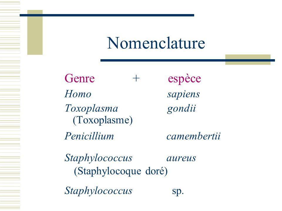 Nomenclature Genre + espèce Penicillium camembertii Homo sapiens