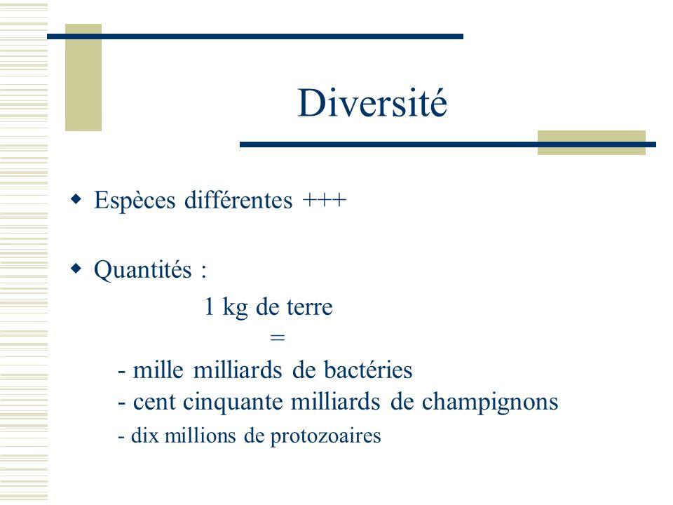 Diversité Espèces différentes +++ Quantités :