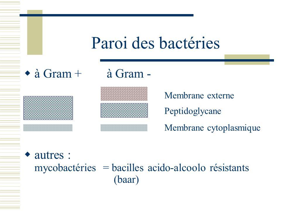 Paroi des bactéries à Gram + à Gram - Membrane externe