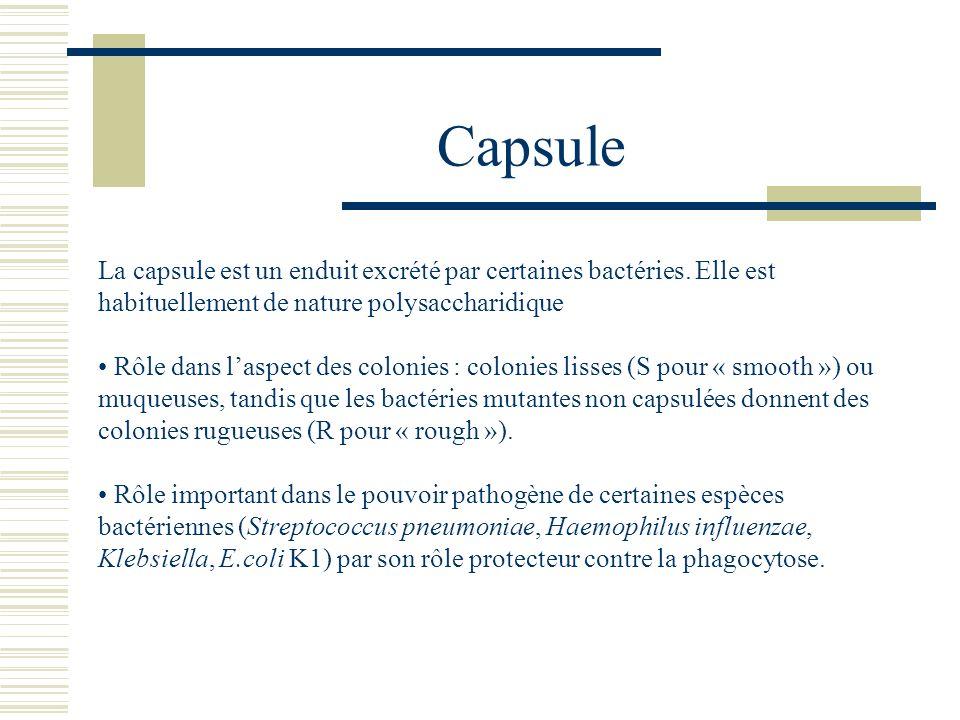 Capsule La capsule est un enduit excrété par certaines bactéries. Elle est habituellement de nature polysaccharidique.