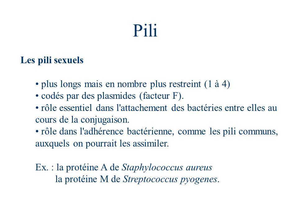 Pili Les pili sexuels plus longs mais en nombre plus restreint (1 à 4)