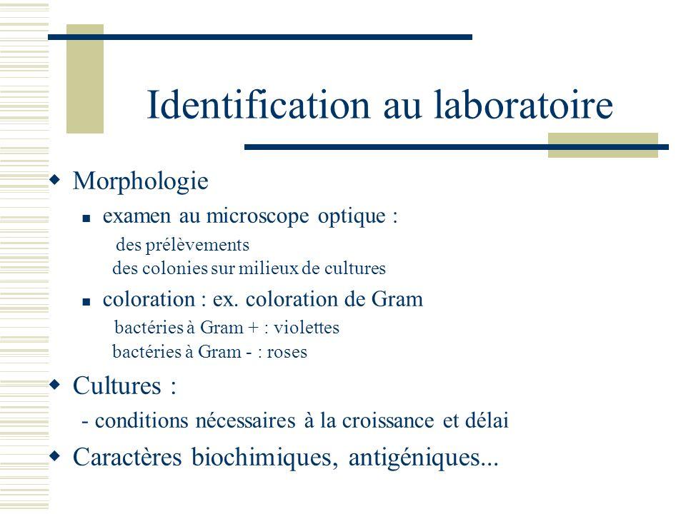 Identification au laboratoire