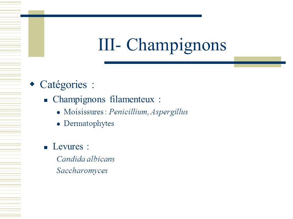 III- Champignons Catégories : Champignons filamenteux : Levures :