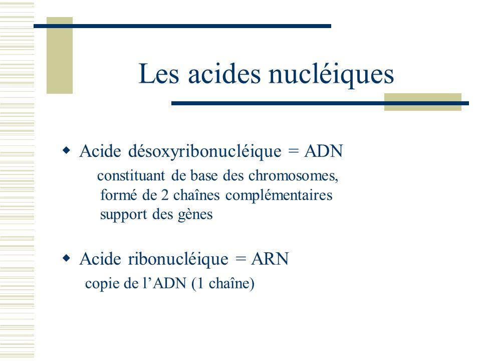 Les acides nucléiques Acide désoxyribonucléique = ADN