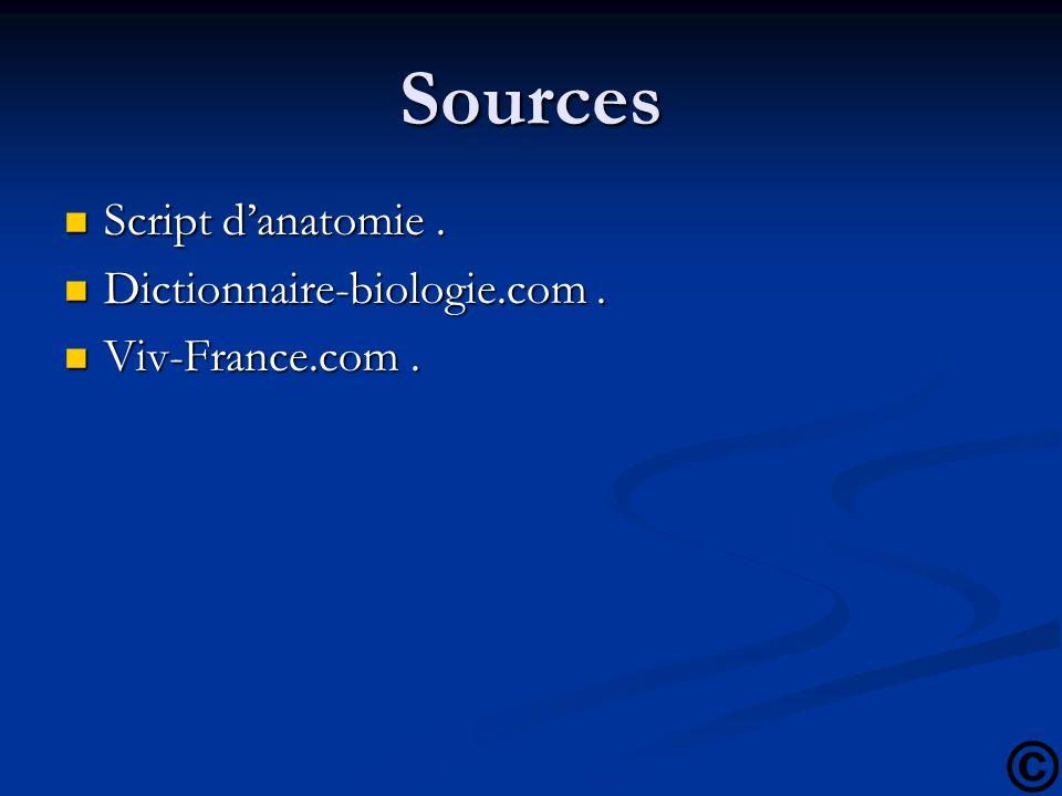 Sources Script d'anatomie . Dictionnaire-biologie.com .
