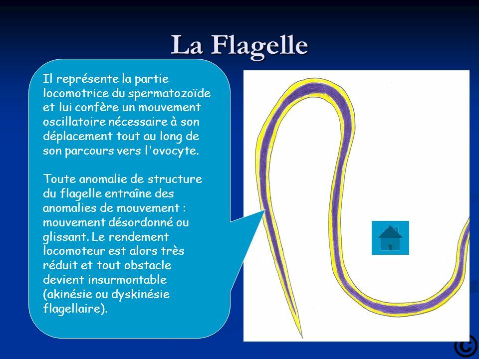 La Flagelle