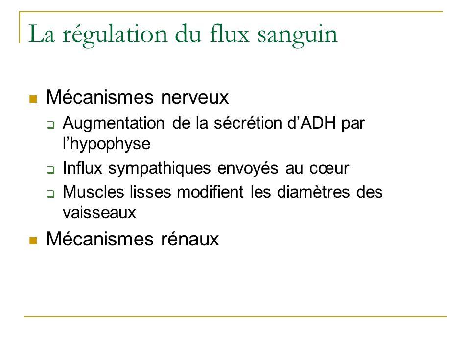 La régulation du flux sanguin