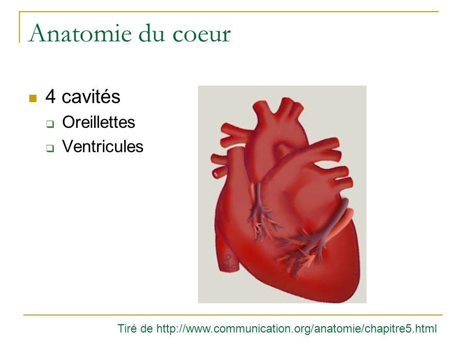 Anatomie du coeur 4 cavités Oreillettes Ventricules