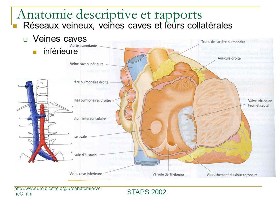 Anatomie descriptive et rapports