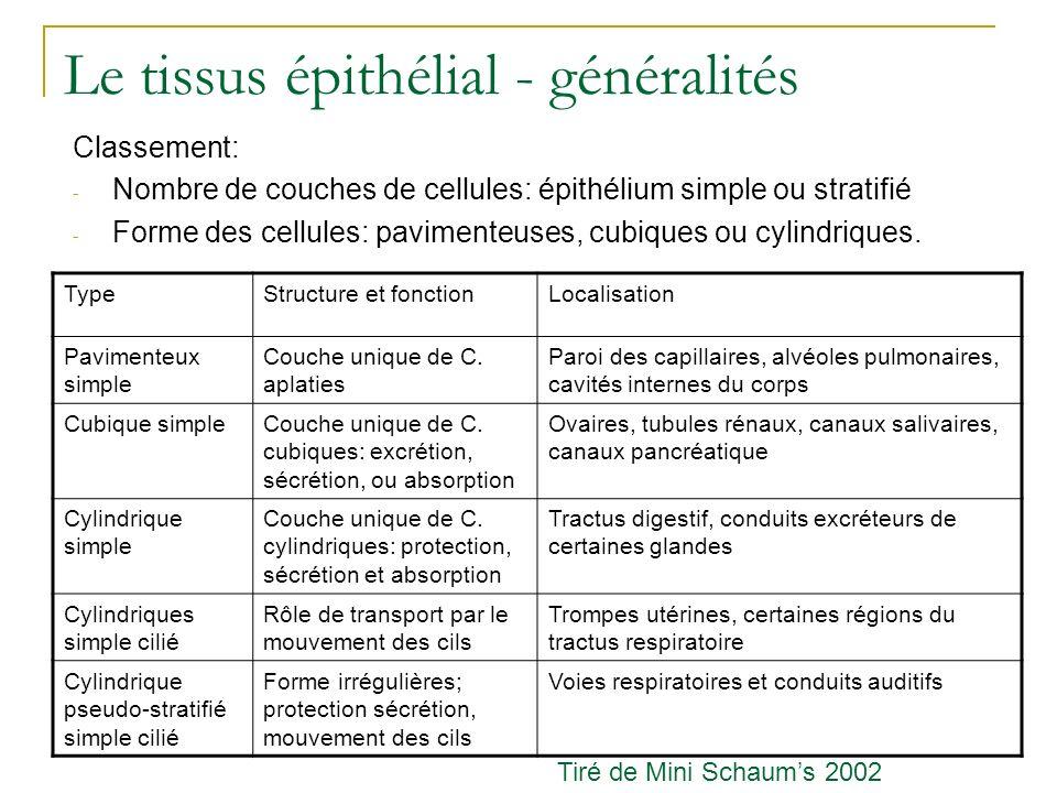 Le tissus épithélial - généralités