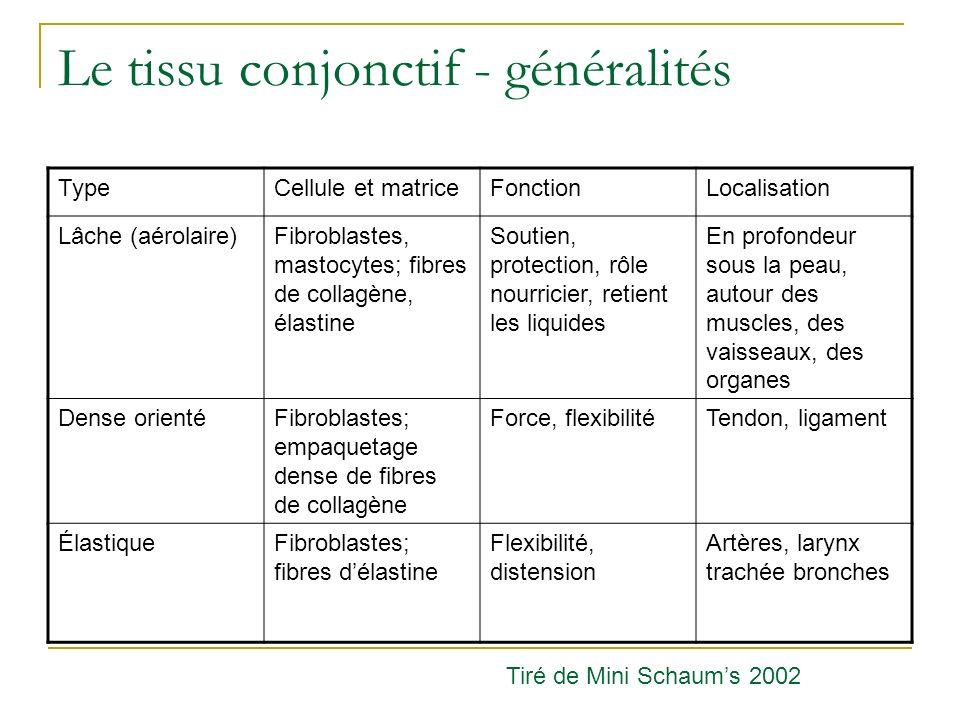 Le tissu conjonctif - généralités