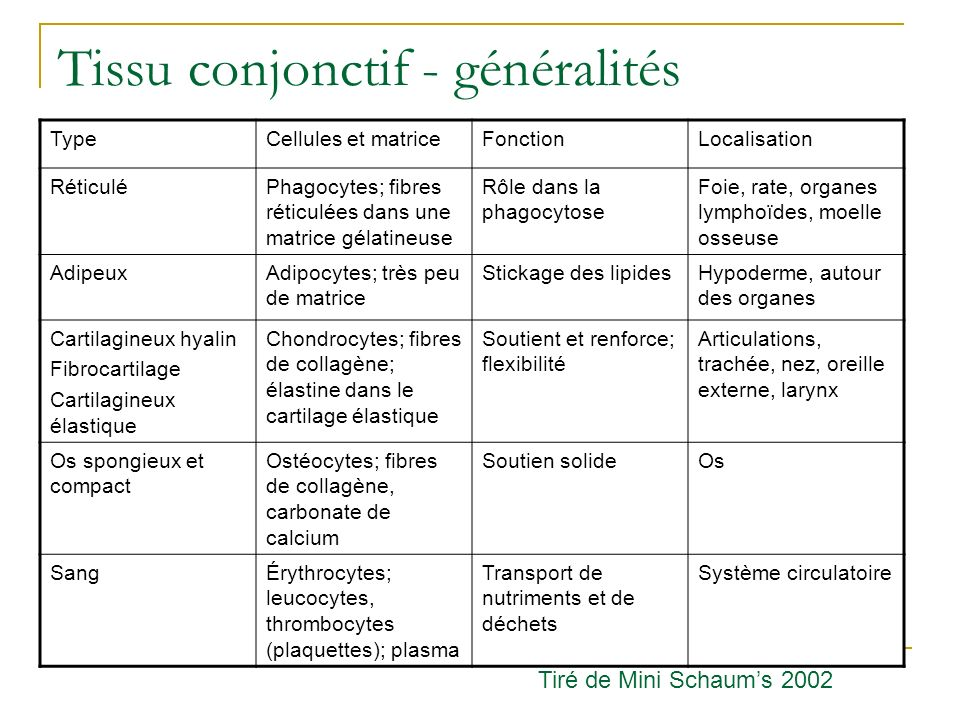 Tissu conjonctif - généralités