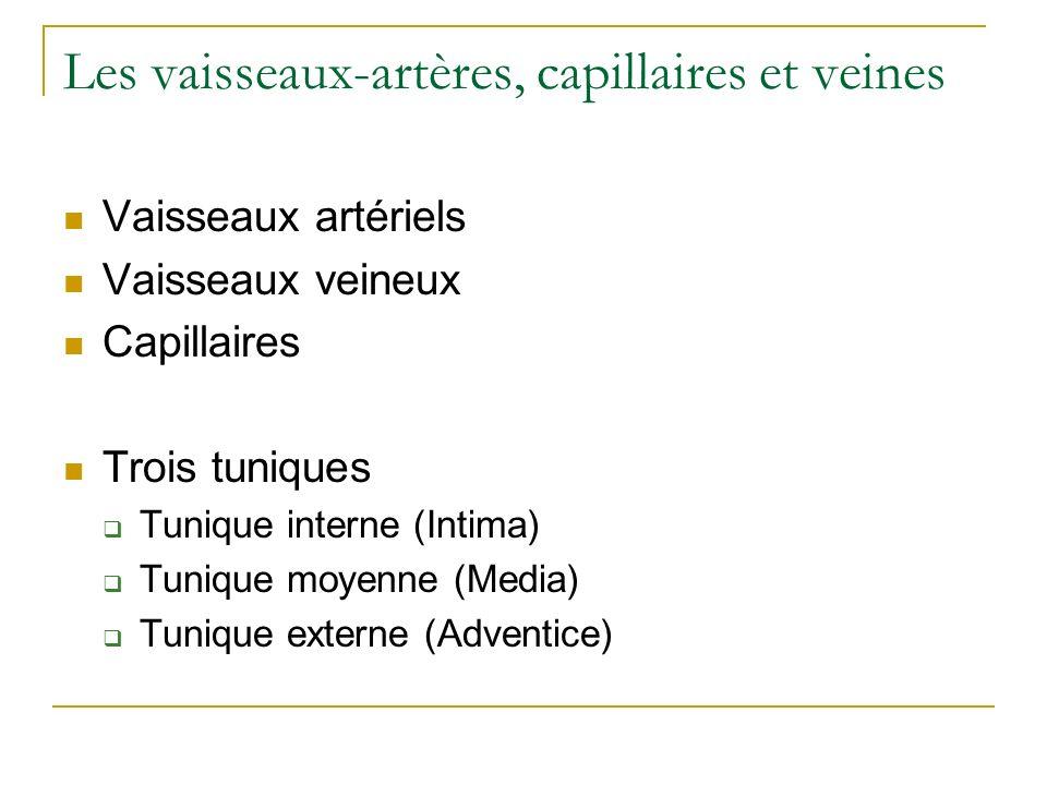 Les vaisseaux-artères, capillaires et veines