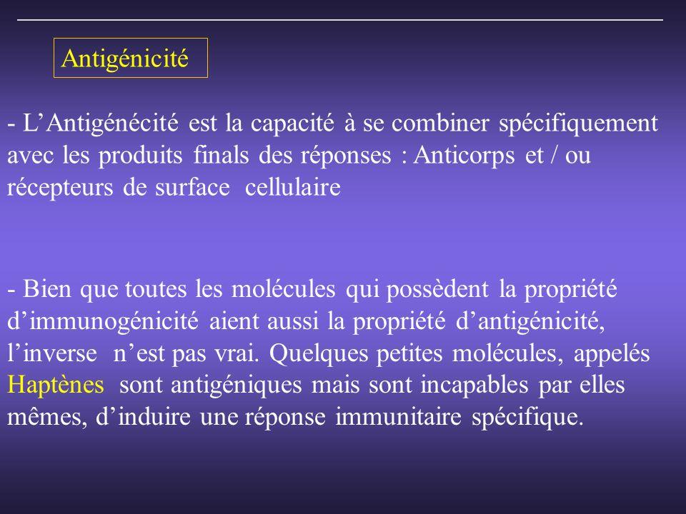 Antigénicité L'Antigénécité est la capacité à se combiner spécifiquement avec les produits finals des réponses : Anticorps et / ou.