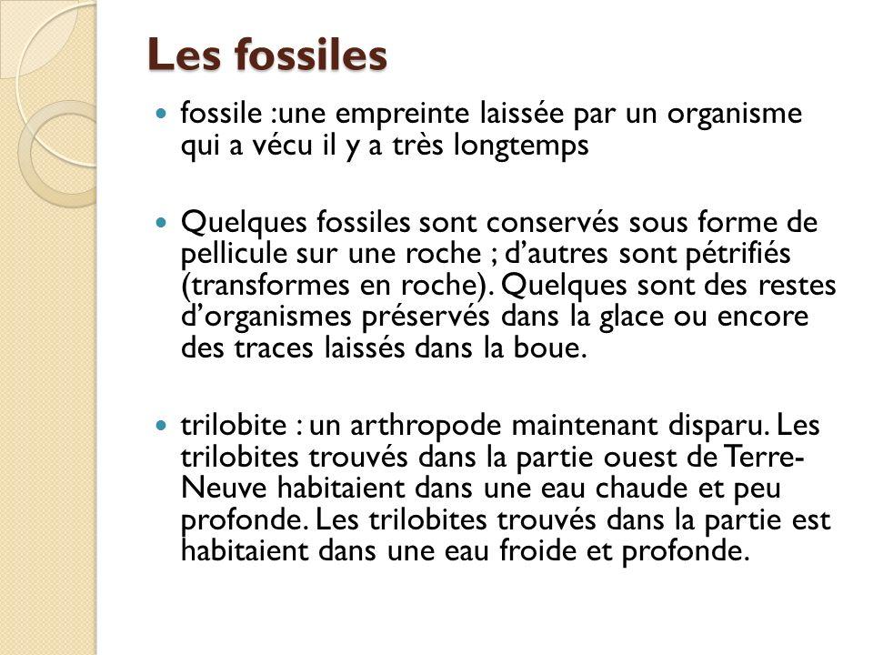 Les fossiles fossile :une empreinte laissée par un organisme qui a vécu il y a très longtemps.