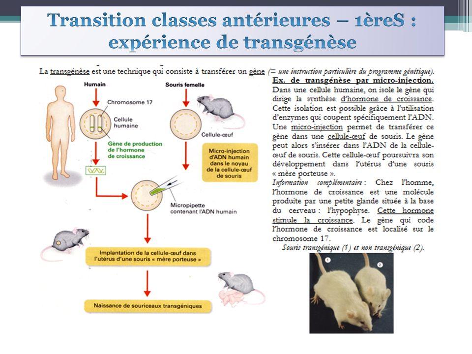 Transition classes antérieures – 1èreS : expérience de transgénèse