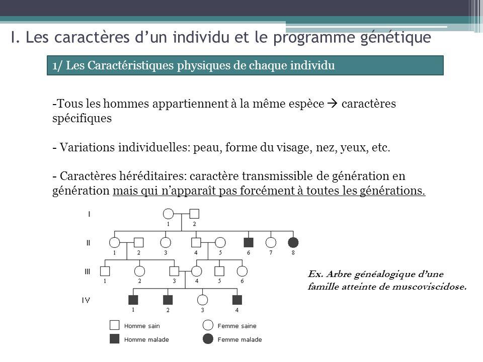 I. Les caractères d'un individu et le programme génétique