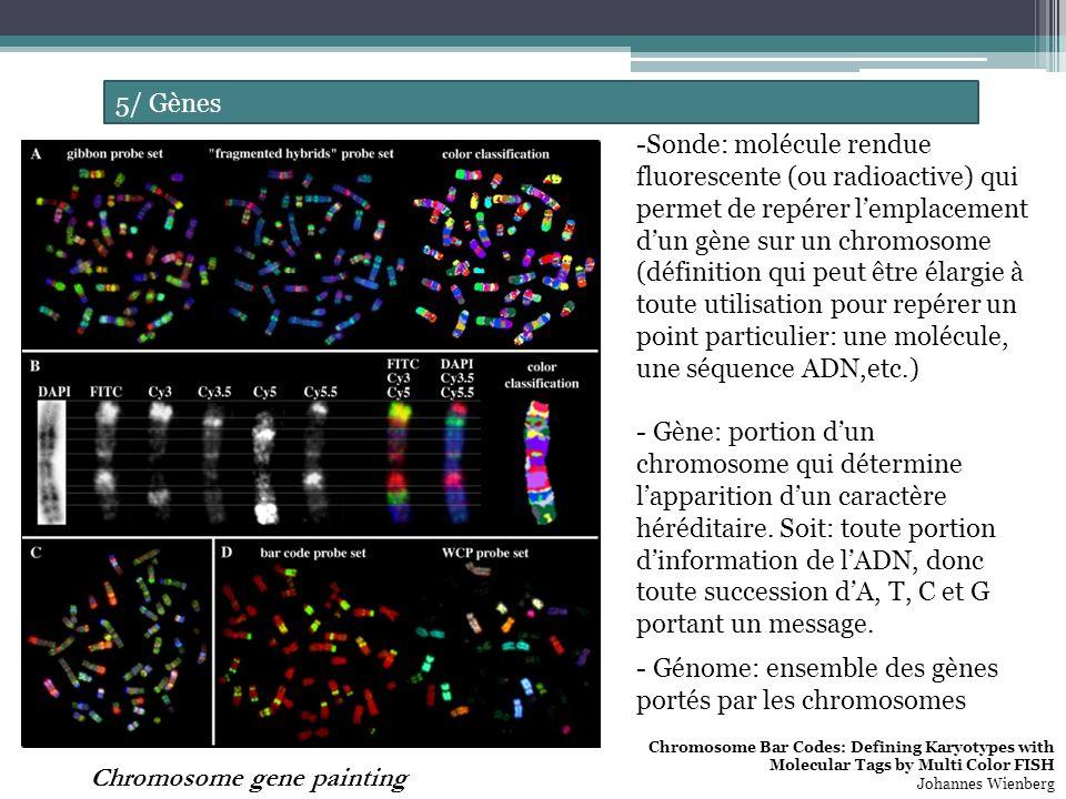 Génome: ensemble des gènes portés par les chromosomes