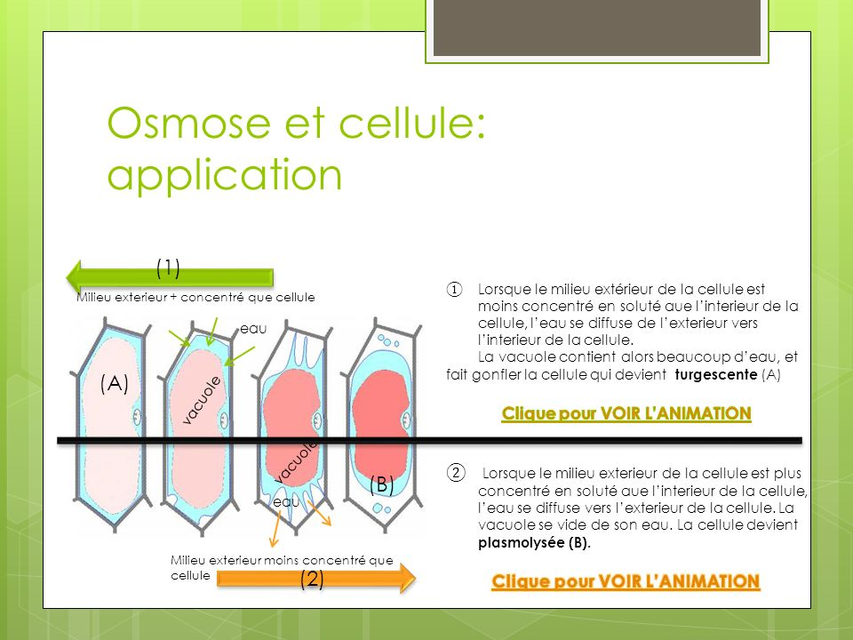 Osmose et cellule: application