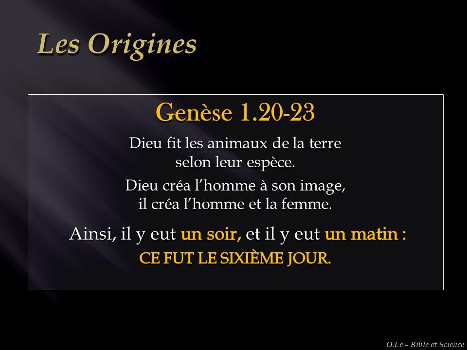 Les Origines Genèse 1.20-23. Dieu fit les animaux de la terre. selon leur espèce. Dieu créa l'homme à son image,