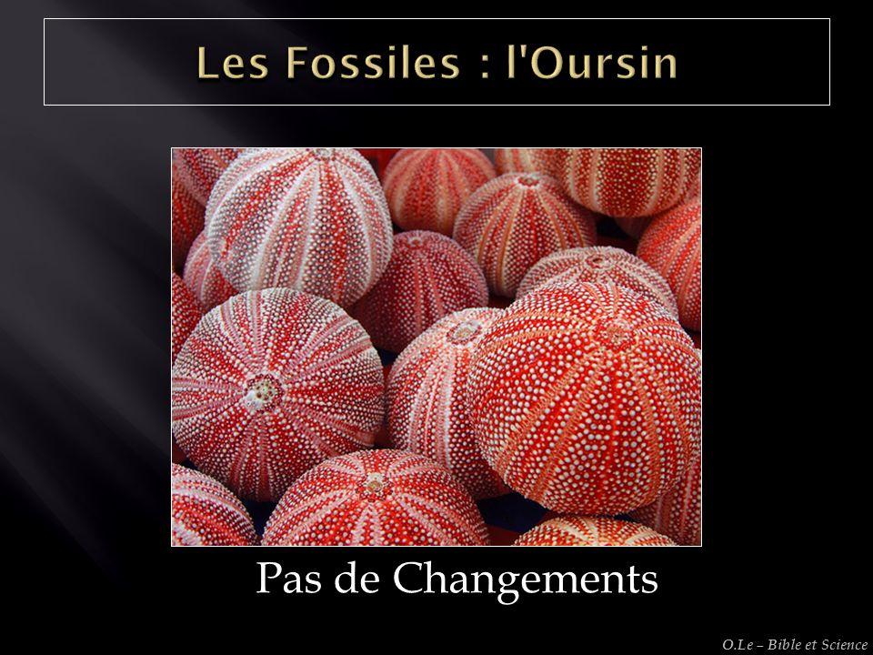 Les Fossiles : l Oursin Pas de Changements O.Le – Bible et Science