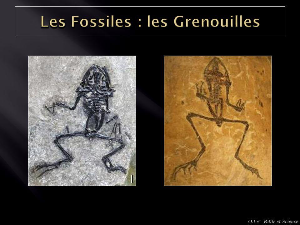 Les Fossiles : les Grenouilles
