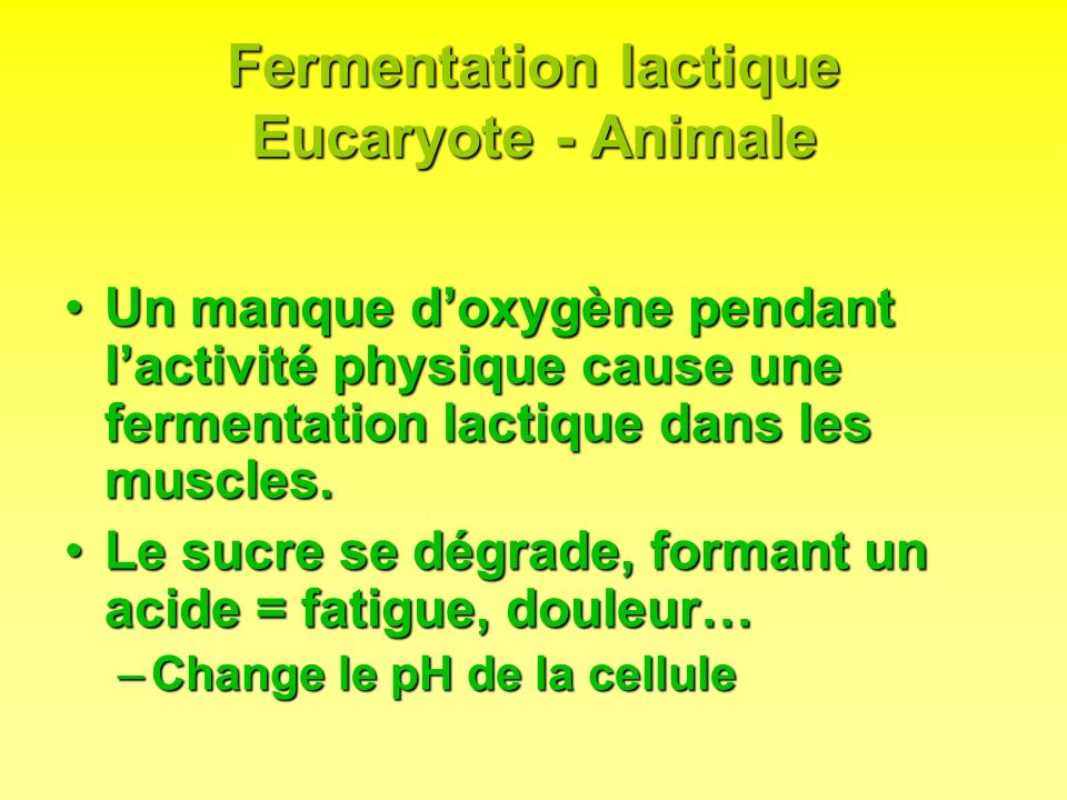 Fermentation lactique Eucaryote - Animale