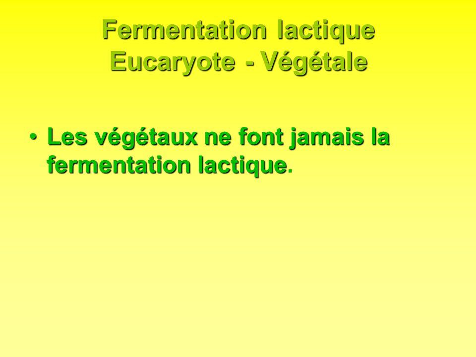 Fermentation lactique Eucaryote - Végétale