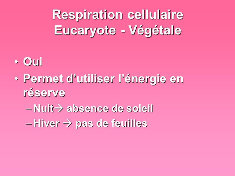 Respiration cellulaire Eucaryote - Végétale