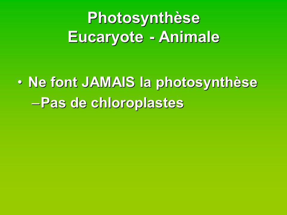 Photosynthèse Eucaryote - Animale
