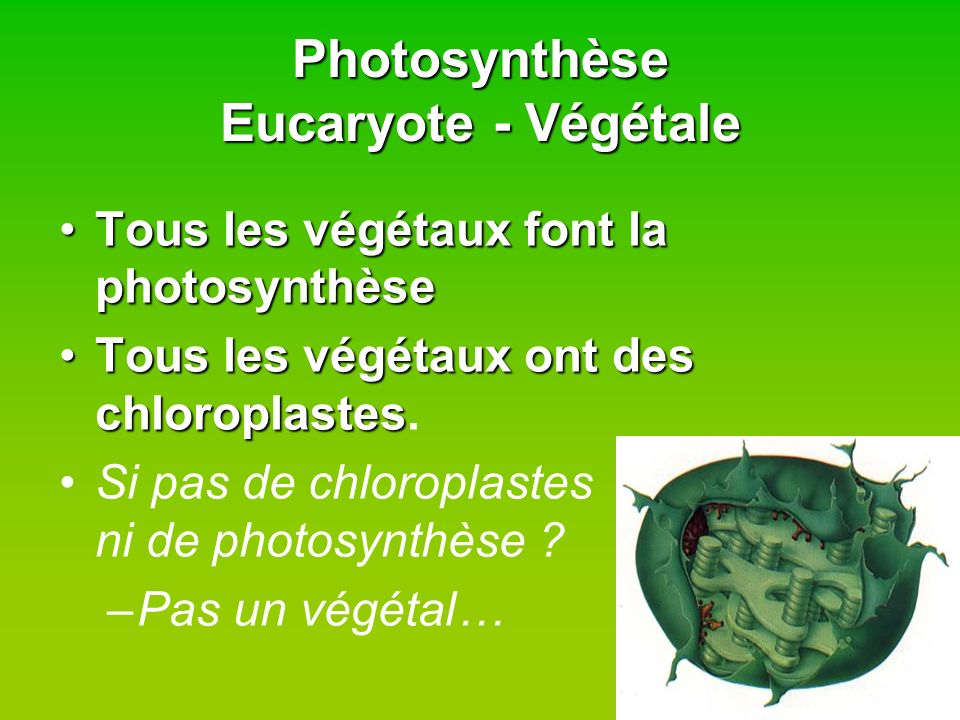 Photosynthèse Eucaryote - Végétale