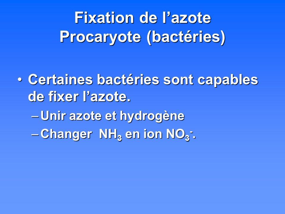 Fixation de l'azote Procaryote (bactéries)