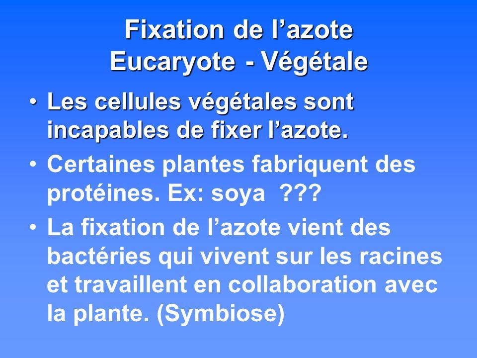 Fixation de l'azote Eucaryote - Végétale